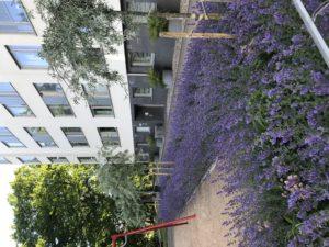 Lavendelrabatt